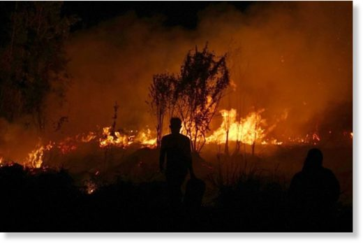 A man watches on as forests helplessly burn on the Indonesian island of Sumatra
