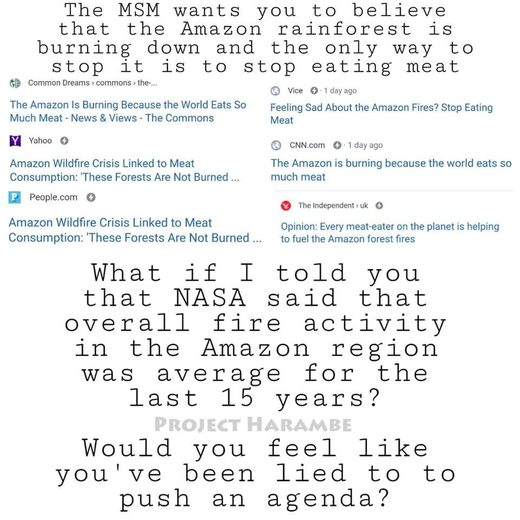 amazon fires eating meat
