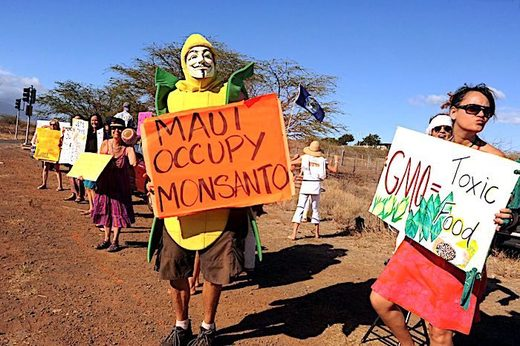 Protesters in Maui