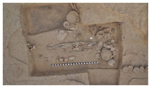 Ancient Bones