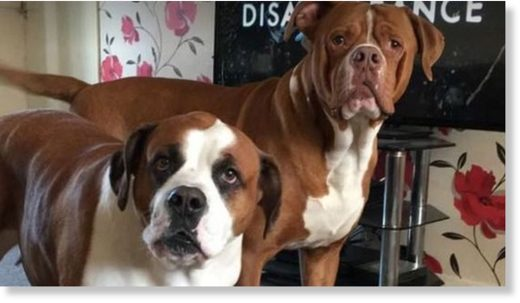 Pictures posted online show two dogs believed to be those involved in the attack