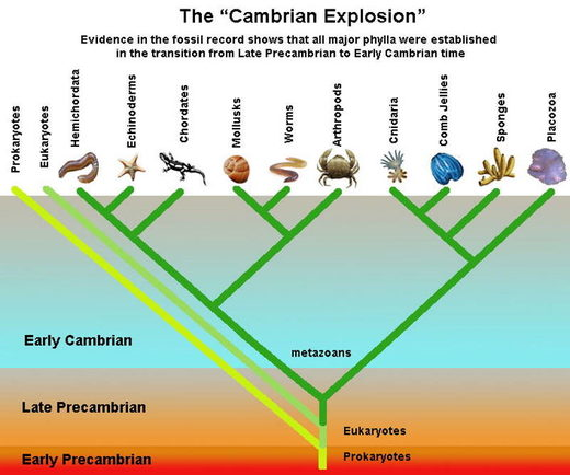 cambrian explosion evolution darwinism