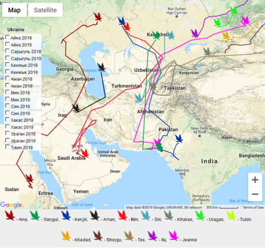 siberian eagle migration routes