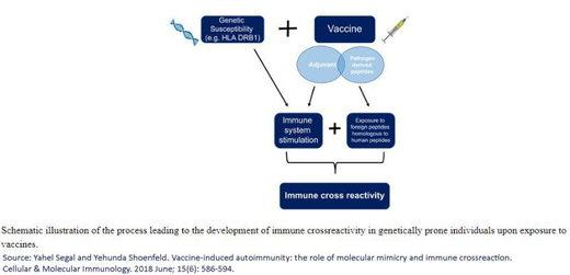 HPV autoimmune
