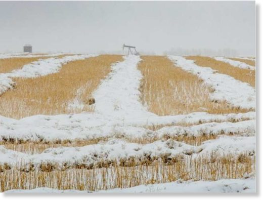 Heavy snow and rain during harvest on the Canadian Prairies
