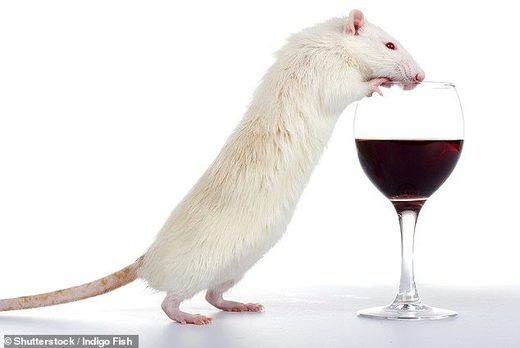 mouse alcohol