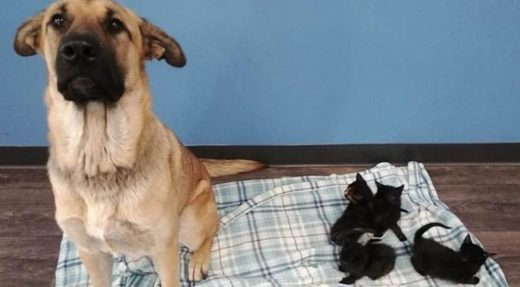 Stray dog found keeping abandoned newborn kittens warm on side of freezing road