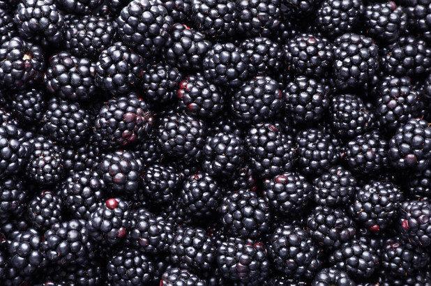 blackberry_feature.jpg
