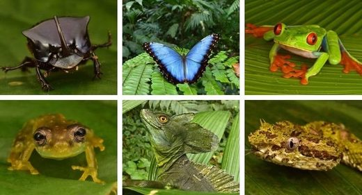 Dozens of 'extinct' creatures found living in 'Lost City' deep within the Honduran rainforest