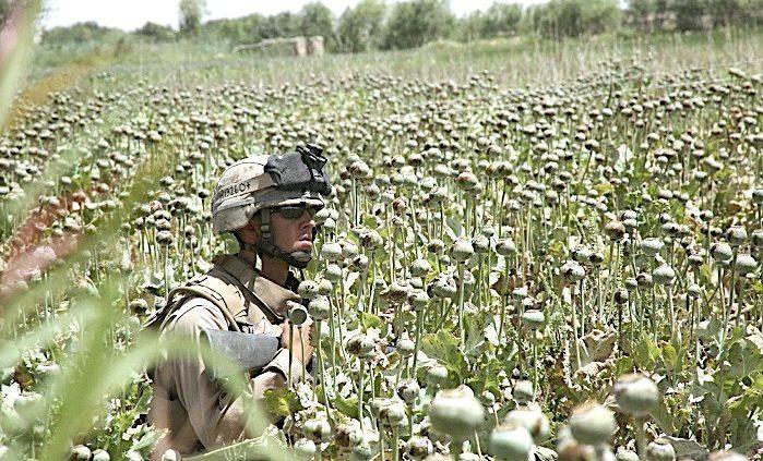 1_Soldier_in_poppy_field_unkno.jpg