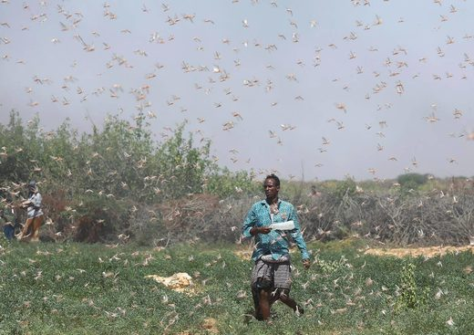 A farmer walks among a swarm of locusts on grazing land in Galmudug region, Somalia