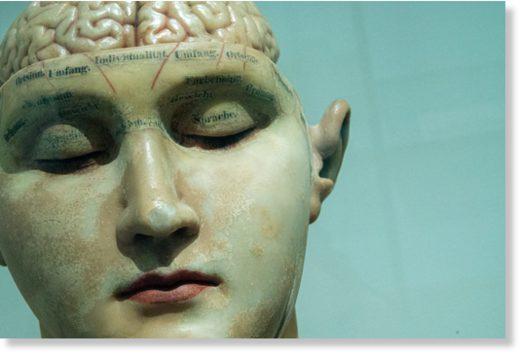 brain skull model