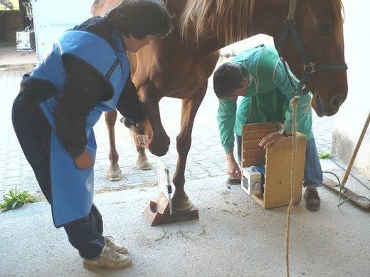 veterinarian evaluates horse