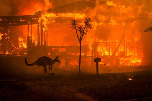 A kangaroo rushes past a burning house amid apocalyptic scenes in Conjola, New South Wales