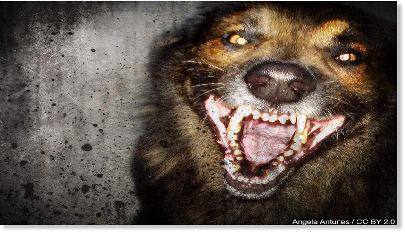 dog_attack.jpg
