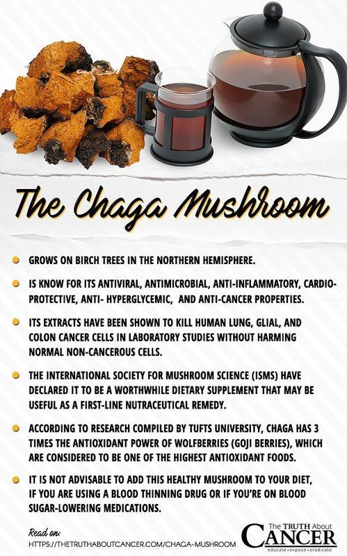 Chaga mushroom facts