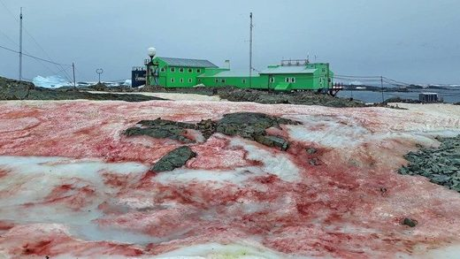 Blood-red snow cloaks polar station in Antarctic