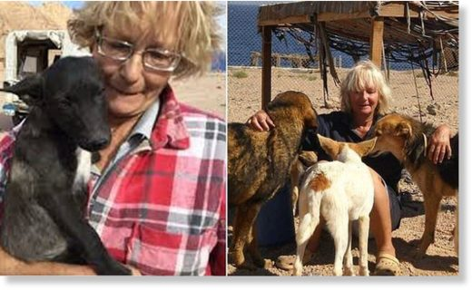 Police fear British woman was mauled to death by stray dogs