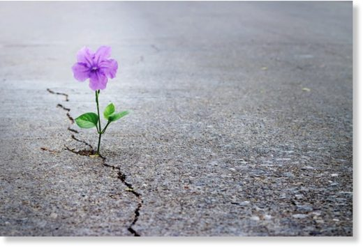 Hope springs eternal – if you nurture it.