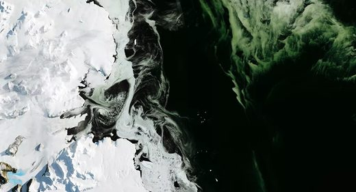 algae bloom antartica
