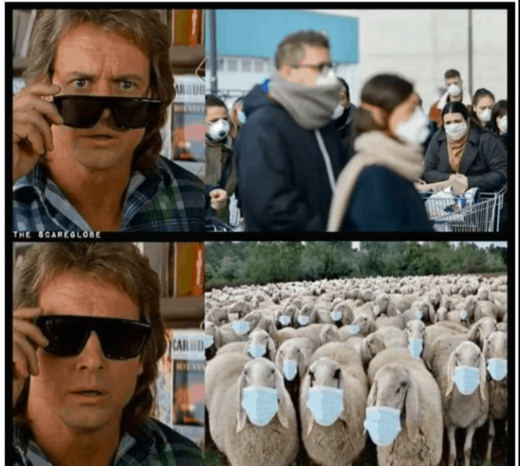 they live sheep covid masks