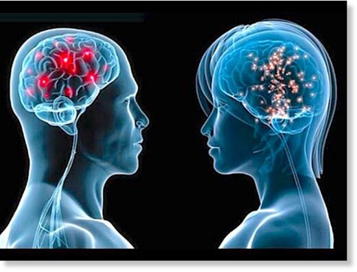 Male/Female brain