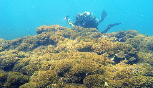 Mysterious new invasive algae smothering Hawaii's coral reefs