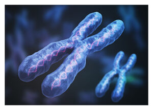 The X chromosome