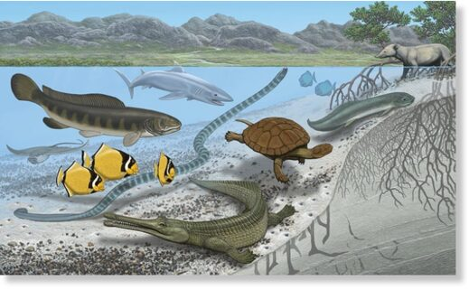 Some of the sea creatures that lived underwater in the location where the Sahara desert is today.