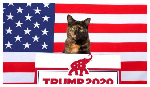 Cats Endorse Trump