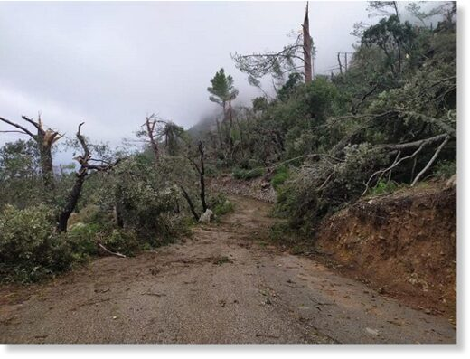 A waterspout ripped the tops off trees in the Serra de Tramuntana mountains