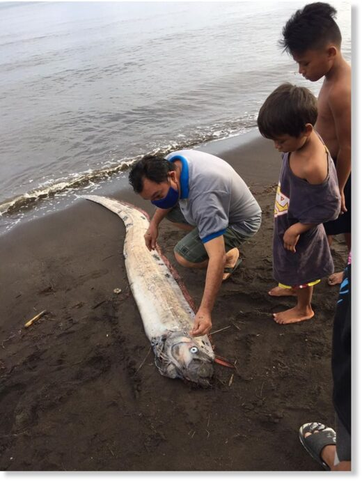 Residents in Barangay 19 of Gingoog City, Misamis Oriental spotted on Thursday morning, August 20, a 3.2-meter oarfish that washed ashore in their coasts.