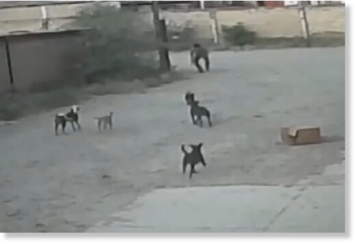 This is the moment Jaime Rico Munoz was cornered by a pack of wild dogs