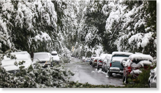 Fallen tree limbs block a street during an early season snow storm on September 9, 2020 in Boulder, Colorado.