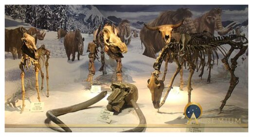 Ice Age Skeletons
