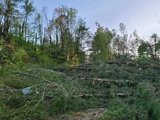Trees downed in Schaghticoke, N.Y., during last week's derecho