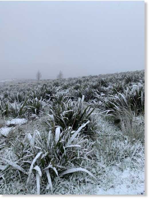 Late spring snow up on the Pineapple Track, Dunedin