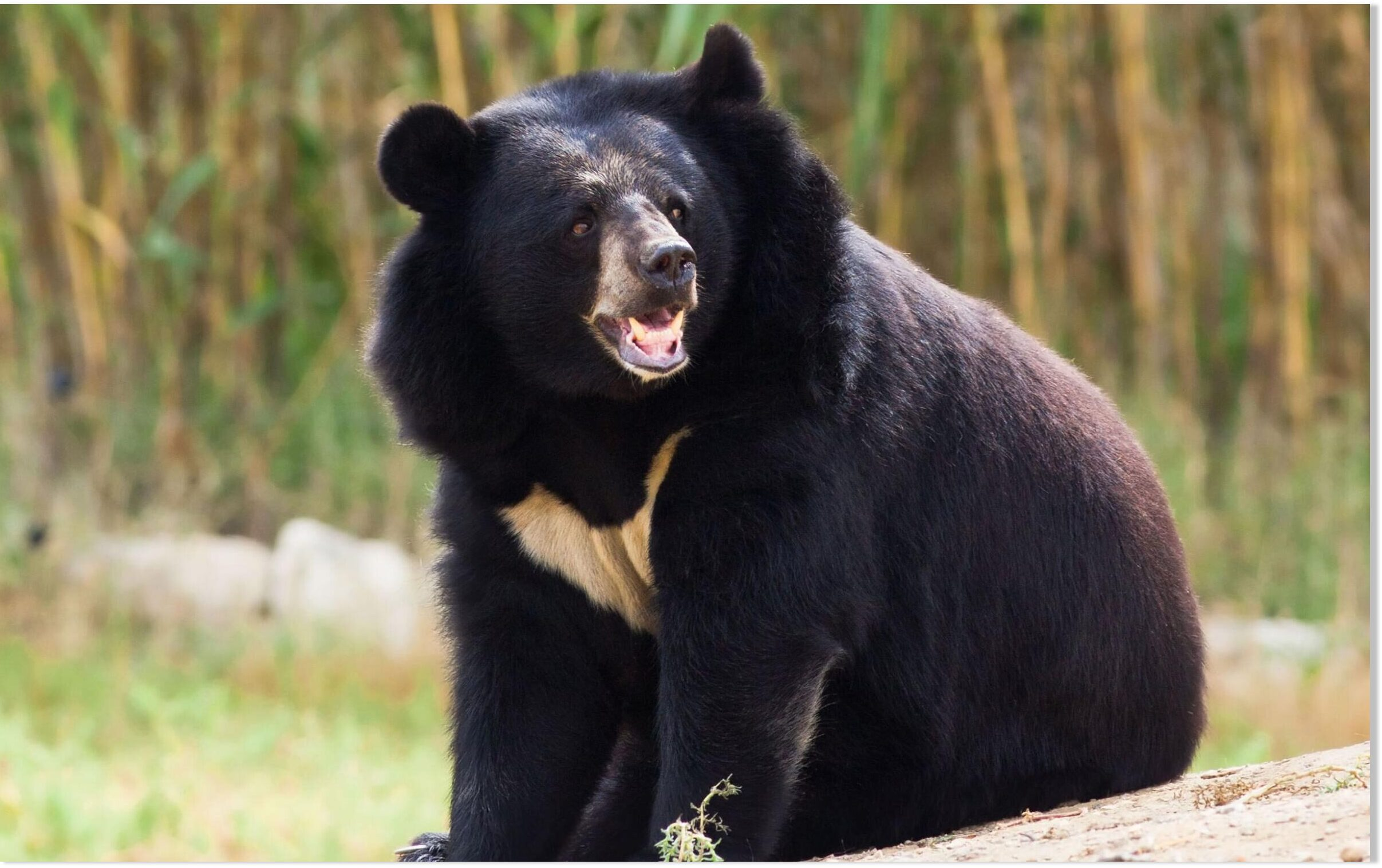 Black bear attacks and injures 4 people in central Japan city