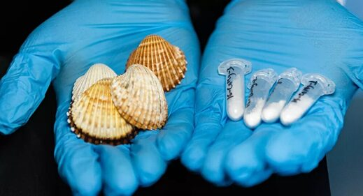biomaterial osteoporosis Blue Mussel Shells