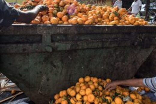 Residents pick tangerines out of a waste bucket