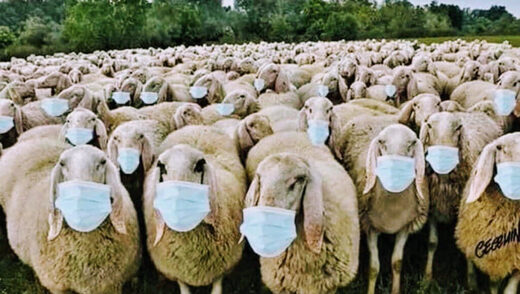 sheep in masks