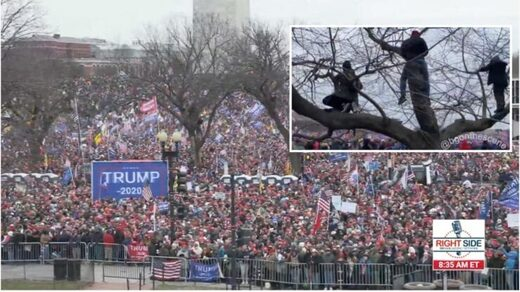 crowds stop steal rally trump