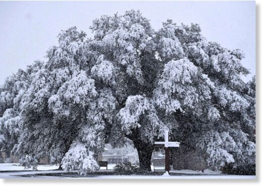 now weighs down on an oak tree outside Brook Hollow Christian Church in Abilene, Texas Jan. 10, 2021.