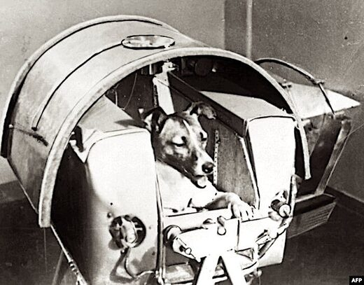 Dog in space container