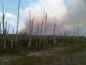 Miami-Dade brush fire