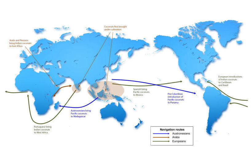 an analysis of trade and conquest in history Start studying ap world history 10, 11, & 12  where did christianity continue long after the muslim conquest,  was spread across trade routes of the mongol .
