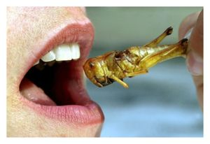 Insect as Food