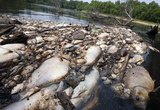 Us bogalusa paper mill admits fault as dead fish flow to for Lake pontchartrain fish species