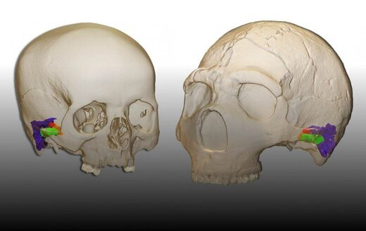 Neanderthals possessed ability to perceive and produce human speech