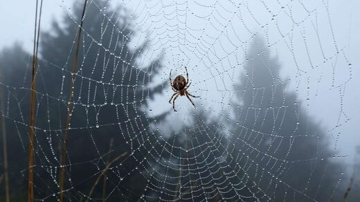 Researchers want to talk to spiders